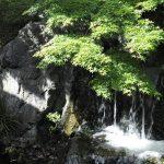 つきじ治作休業日のお知らせ(令和2年8月3日更新)